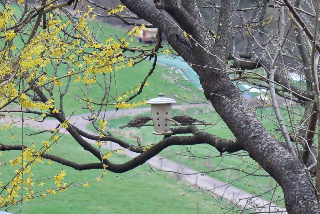 Vogelfutterhäuschen Keramik